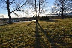 Träd finland Royaltyfri Foto
