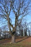 Träd finland Fotografering för Bildbyråer