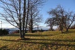 Träd finland arkivfoto