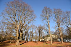Träd finland Arkivbilder