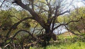 Träd & flod Nr Crookham norr Northumberland, England Royaltyfri Fotografi