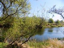 Träd & flod Nr Crookham norr Northumberland, England Arkivfoto