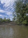 Träd, flod och himlar en sommardag Arkivbild