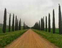Träd-fodrad aveny i Tuscany royaltyfria foton