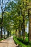 Träd-fodrad aveny på våren Royaltyfri Foto