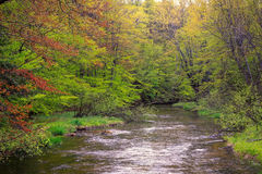 Träd fodrad flod i vår Arkivbild