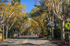 Träd-fodrad gata i en bostads- grannskap på en solig höstdag royaltyfri foto