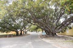 Träd-fodrad gata på den Rottnest ön Royaltyfri Bild