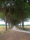 Träd fodrad gata på västkusten av Italien Arkivfoton
