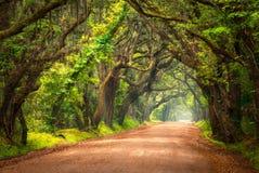 Träd fodrad grusväg Lowcountry Charleston South Carolina Fotografering för Bildbyråer