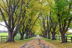 Träd fodrad landsgränd i höst Royaltyfri Foto