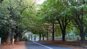 Träd fodrad landsväg under höstnedgång royaltyfri fotografi