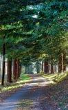 Träd fodrad slingrig landsgränd i höst royaltyfri fotografi