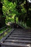 Tr?d-fodrad trappaYamate Yokohama Japan f?rsommar arkivbilder