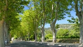 Träd fodrad väg i Provence Arkivfoto