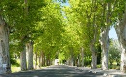 Träd fodrad väg i Provence Arkivbild