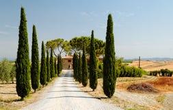 Träd fodrad väg i tuscany Arkivfoton