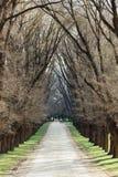 Träd fodrade Laneway Royaltyfri Foto