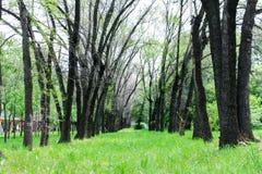 Träd fodrar i parkerar arkivfoto