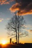 Träd Forest City Arkivfoto