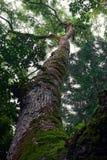 Träd från botten arkivbilder