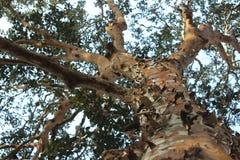 Träd från botten Arkivfoton