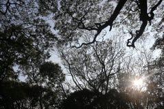 Träd från en nedersta sikt med solen rays genomträngande Royaltyfri Bild