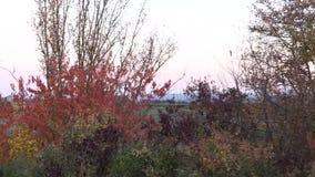 Träd från ett bilfönster stock video