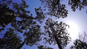 träd från låg punkt av sikten som blåser i bris arkivfilmer