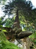 Träd från nedåtgående Arkivbilder