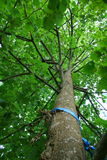 Träd från ner under Royaltyfri Fotografi