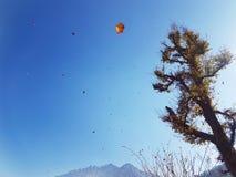 Träd från skönheten av Himalayas Royaltyfri Fotografi