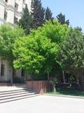 Träd framme av byggnad Royaltyfria Foton