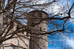 Träd framme av den Madama slotten, Turin, Italien fotografering för bildbyråer