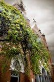 Träd framme av en kyrka i ner stad arkivfoto
