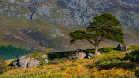träd framme av ett berg Arkivfoton