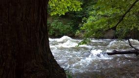 Träd framme av floden Arkivfoton