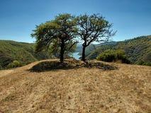 Träd framme av sjön Fotografering för Bildbyråer