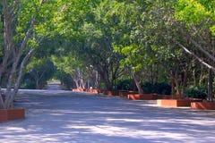 Träd gör mellanslag med vägen som är horisontal Arkivbild