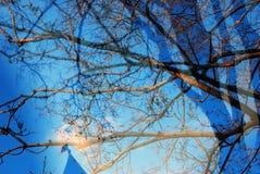 Träd Göra sammandrag fotoet Arkivfoton