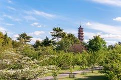 Träd, gränd och pagod Arkivbilder