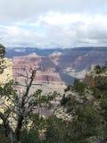 Träd Grand Canyon södra Rim View royaltyfri foto