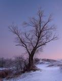 Träd härlig solnedgångvinter Royaltyfri Foto