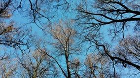 Träd & himmel Arkivfoto