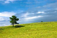 Träd i äng arkivbild