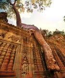 Träd i Angkor arkivfoto