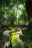 Träd i Angkor fotografering för bildbyråer