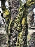 Träd i Autumn Season Arkivbilder