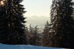 Träd i berg och landskap i ogenomskinlighet, vinterdag arkivbilder