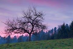 Träd i berg på den purpurfärgade solnedgången Arkivfoto
